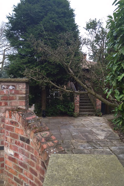 before Removal of unwanted and problematic trees at a property in Alderley Edge