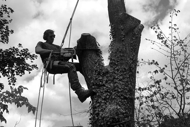 Steve Tree Surgeon Cutting Edge Tree Care Macclesfield section felling