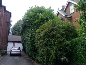 hedge trimming Macclesfield before